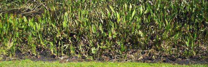 Orlando lakes and wetlands ponds and wetland management for Koi pond builders orlando fl